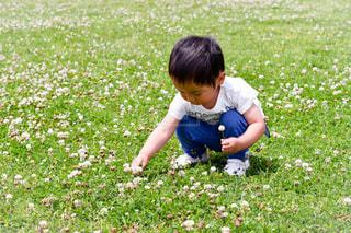 花をつむ小さな男の子の写真・画像素材[1159526]