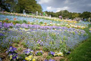 春,お花畑,鮮やか,横浜市,神奈川県,里山ガーデン,ガーデンネックレス