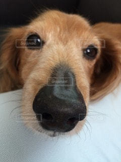 犬の写真・画像素材[38425]