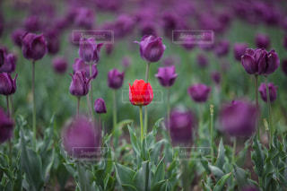 ピンクの花は草の中に立っています。の写真・画像素材[1137873]