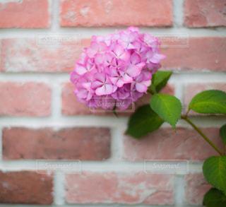 レンガの壁に花の花瓶の写真・画像素材[1261914]