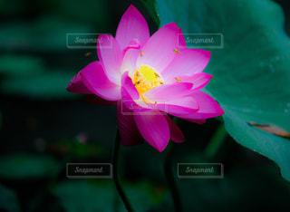 近くの花のアップの写真・画像素材[1371834]