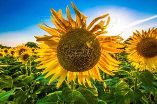 近くに黄色い花のアップの写真・画像素材[1397242]