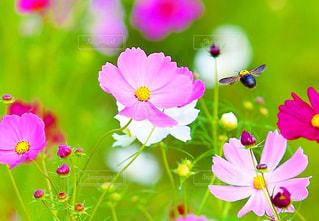 近くの花のアップの写真・画像素材[1456683]