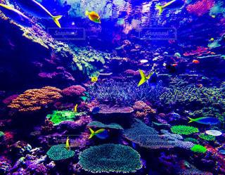 サンゴの水中ビューの写真・画像素材[1543463]