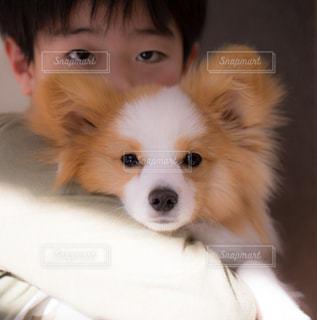 犬,動物,わんちゃん