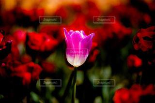 花の写真・画像素材[2023193]