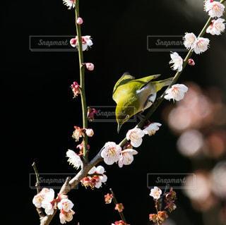テーブルの上に花の花瓶の写真・画像素材[3015905]
