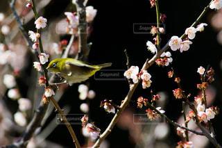 木からぶら下がっている花の写真・画像素材[3021807]