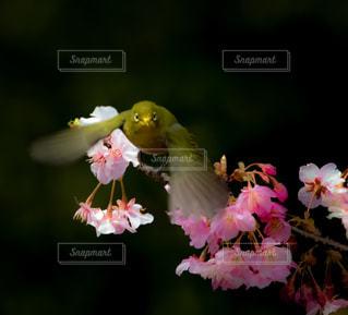花のクローズアップの写真・画像素材[3039234]