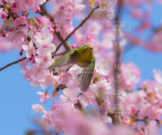 花のクローズアップの写真・画像素材[3039240]
