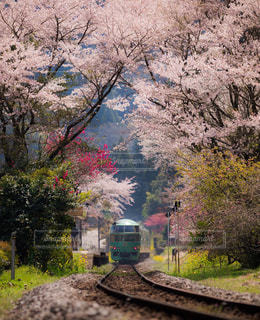森の近くで列車の線路を下って移動する列車の写真・画像素材[3045980]