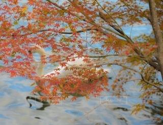 木のクローズアップの写真・画像素材[3824413]
