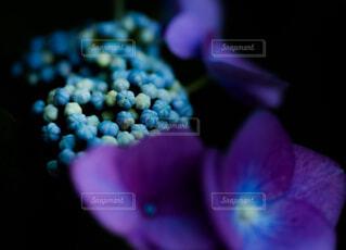 花のクローズアップの写真・画像素材[4556142]