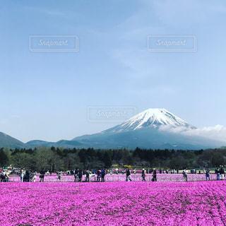 芝桜と富士山の写真・画像素材[1154564]