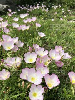 海辺の花の写真・画像素材[1154933]