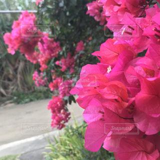 南国らしい花の写真・画像素材[1154938]