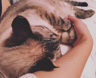 愛猫とのんびり*の写真・画像素材[1229547]