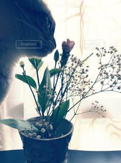 テーブルの上の花の花瓶の横に座っている猫の写真・画像素材[1286333]