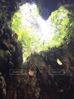 自然,緑,ハート,癒し,幸せ,鹿児島,屋久島