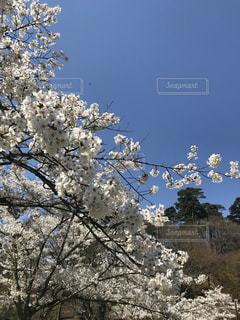 空,春,桜,屋外,湖,景色,日中