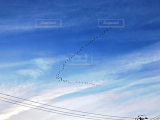 季節を伝える渡り鳥の写真・画像素材[1138147]