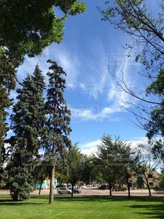 コロラド州立大学にある自然の木々 - No.1136573