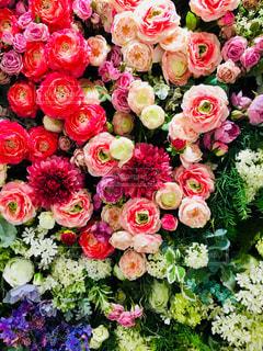 近くの花のアップ - No.1137548