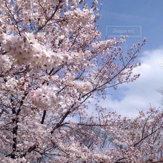近くの木のアップの写真・画像素材[1138249]
