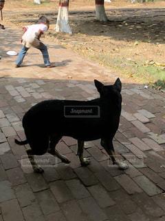 歩道の上を歩く猫の写真・画像素材[1166640]
