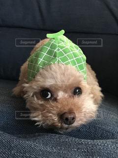 ソファーに座っている小さな犬 - No.1184039