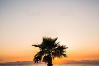 風景,夕日,夕陽,landscape
