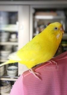 オウムの上に座っている小鳥の写真・画像素材[2718116]