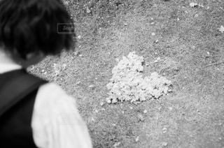 花,桜,白黒,ハート,フィルム