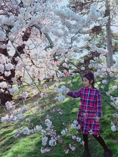 春のニューヨーク植物園、桜の下で。の写真・画像素材[1146925]