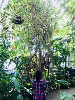 春のニューヨーク植物園にての写真・画像素材[1146938]