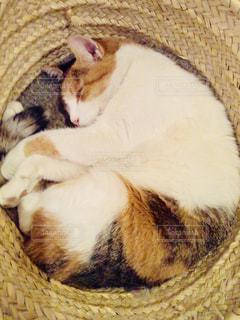 カゴの中で丸まって眠る猫の写真・画像素材[1148387]