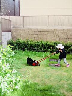 芝刈りのお手伝いの写真・画像素材[1152164]