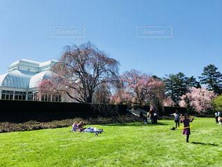 フラフープで遊ぶ女の子の写真・画像素材[1158995]
