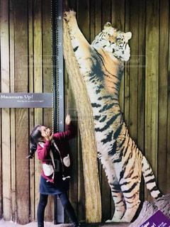トラと女の子の写真・画像素材[1158996]