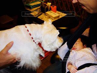 犬と赤ちゃんの写真・画像素材[1169536]