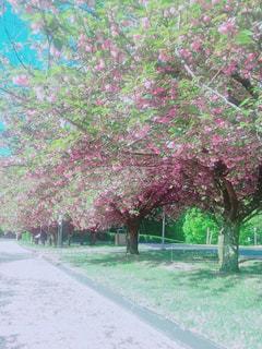 新緑と花びらの絨毯 - No.1177601
