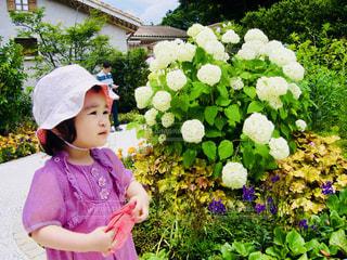 白い紫陽花と女の子の写真・画像素材[1196277]