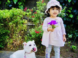 ペコちゃんみたいな犬と女の子の写真・画像素材[1207441]