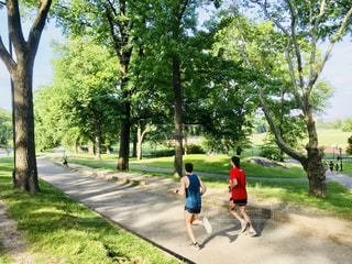 男性,風景,公園,ニューヨーク,木,屋外,緑,葉,アメリカ,景色,走る,草,新緑,人,ジョギング,歩道,健康,マンハッタン,芝,通り,セントラルパーク,トレーニング,フォトジェニック,インスタ映え