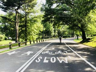 セントラルパークの自転車道の写真・画像素材[1256017]