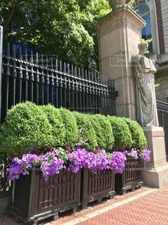 コロンビア大学前の花壇と像の写真・画像素材[1256747]