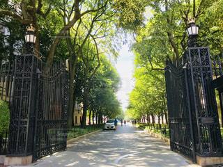 コロンビア大学正門から続く道の写真・画像素材[1258117]