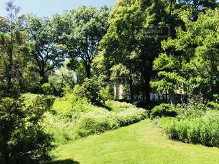 緑豊かなガーデンの写真・画像素材[1258350]