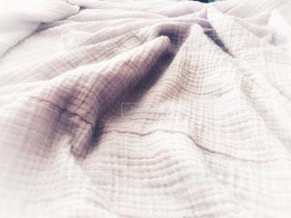 ラベンダー色のブランケットの写真・画像素材[1259642]